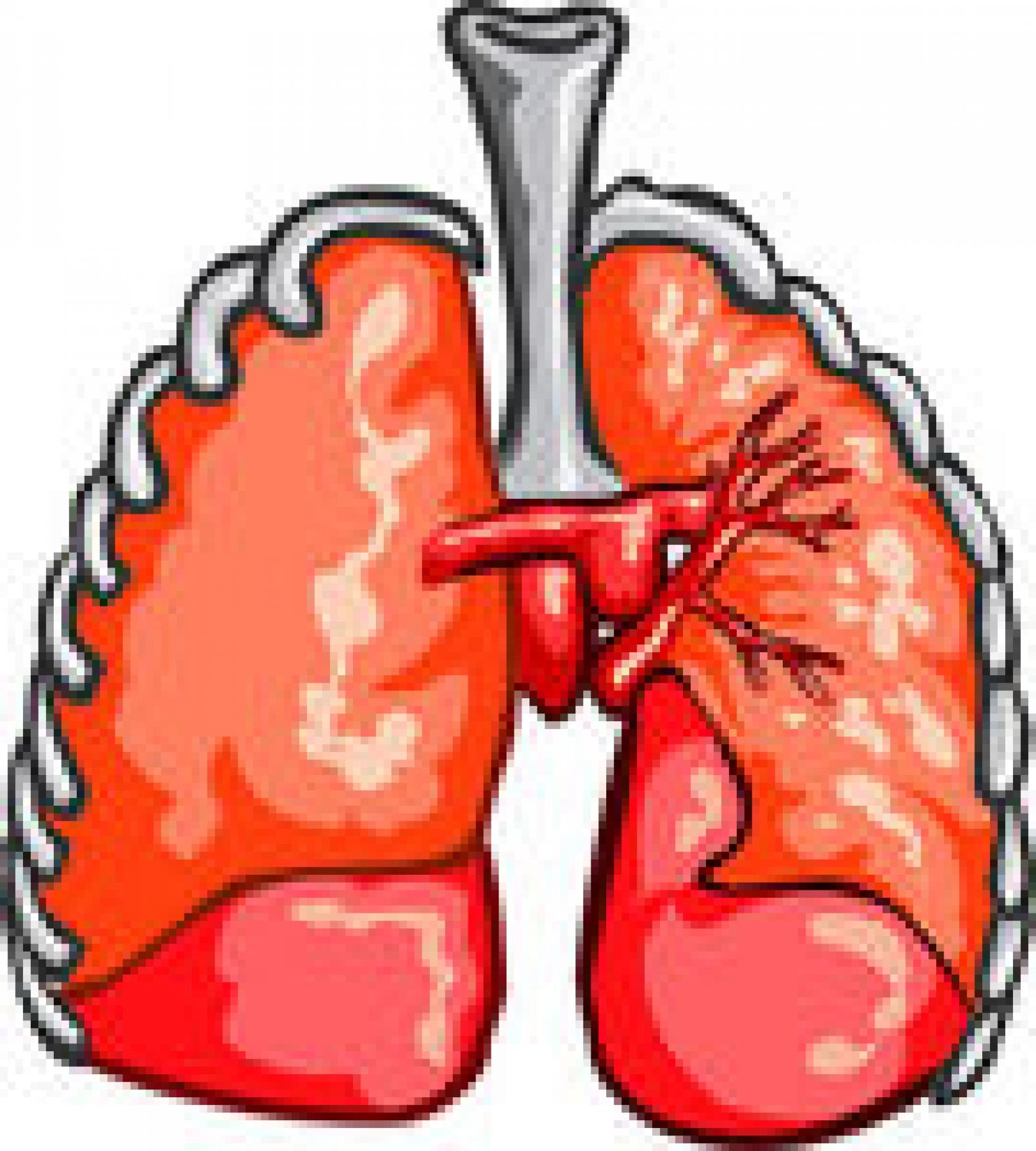 respiratory clip art art.