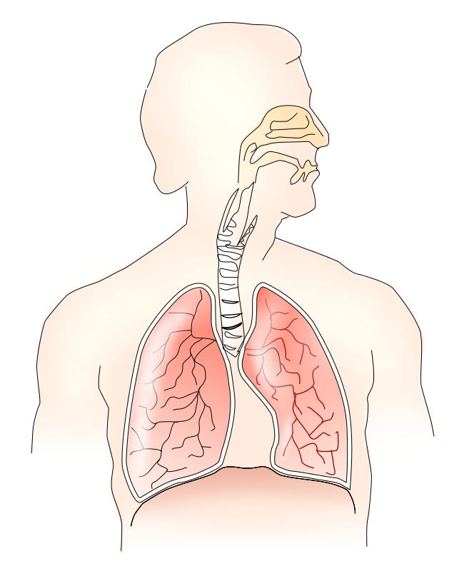 Respiratory Clipart.