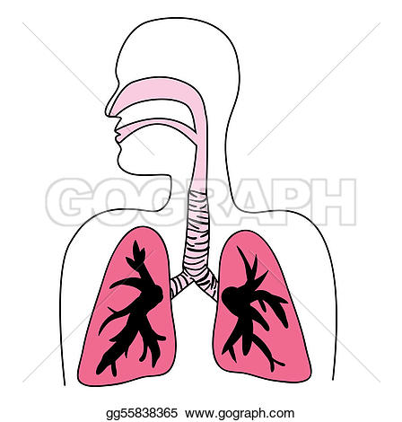 Respiratory System Clip Art.