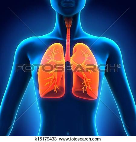Respiratory Clip Art and Stock Illustrations. 3,432 respiratory.