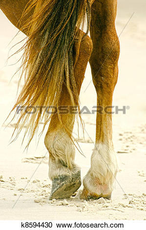 Stock Photography of Feet and legs of horse in resting position.