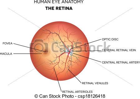 Retina Stock Illustrations. 2,248 Retina clip art images and.