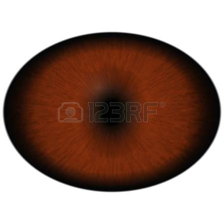 0 The Retina Stock Vector Illustration And Royalty Free The Retina.