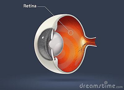 Retina clipart.