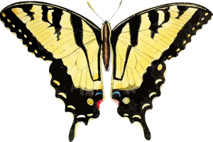Butterfly Retouched Clip Art Download.