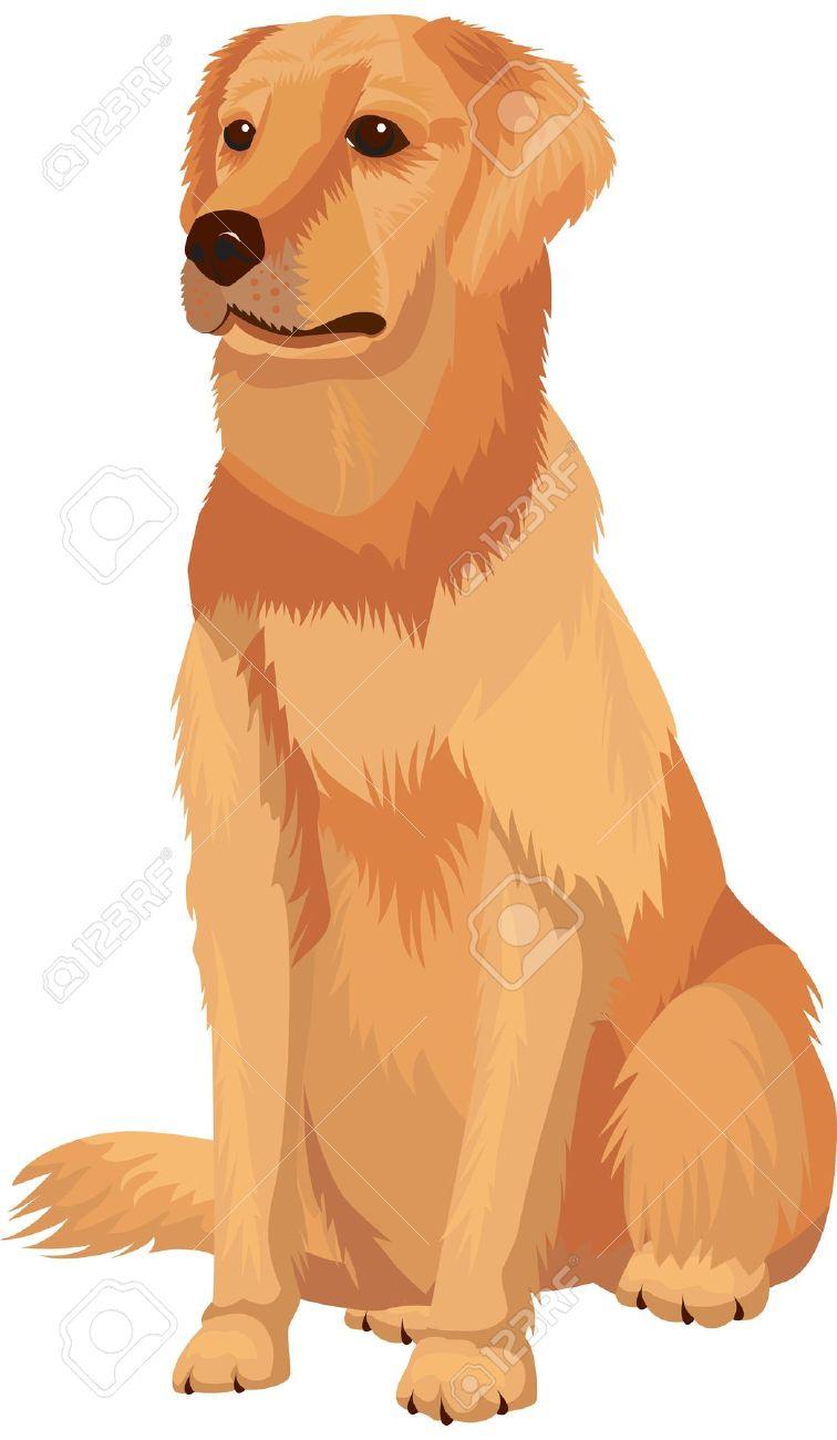 4,872 Labrador Retriever Cliparts, Stock Vector And Royalty Free.