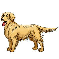 Clipart golden retriever dog.