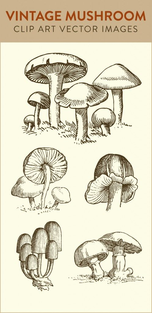 1000+ images about mushroom on Pinterest.