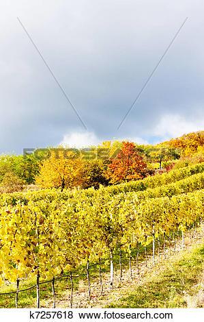 Pictures of autumnal vineyards in Retz region, Lower Austria.