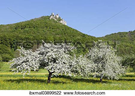 """Stock Photo of """"Reussenstein castle ruins above Neidlingen Valley."""