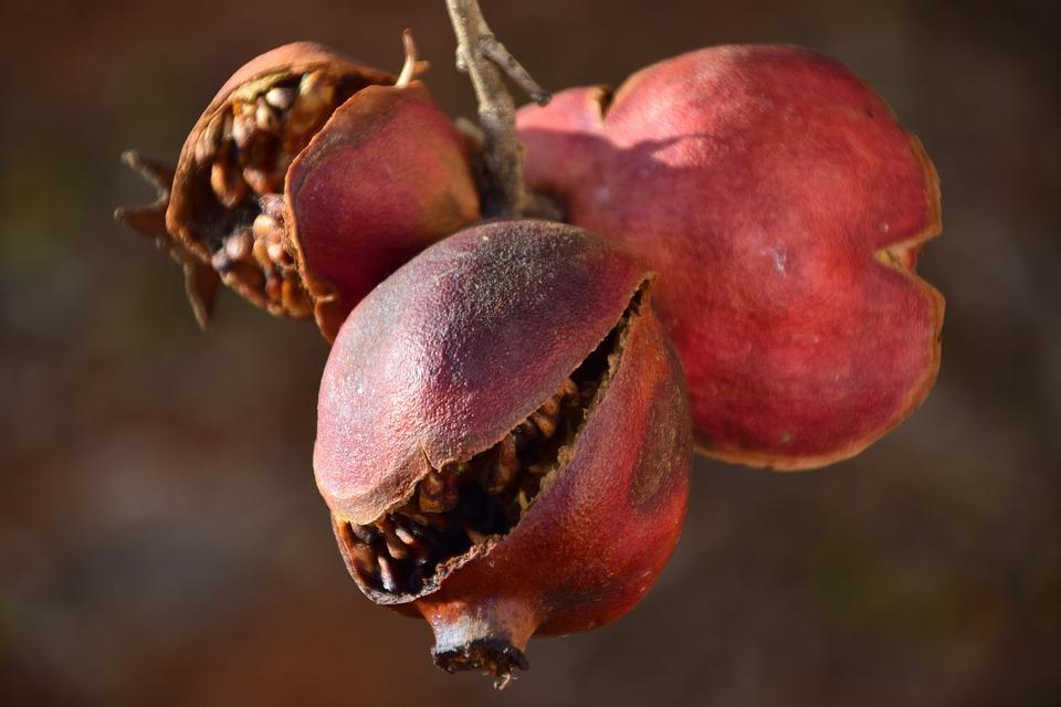 Pomegranate.