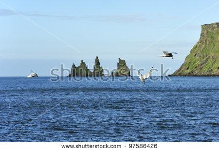 Bird With Iceland Landscape Stock Photos, Royalty.