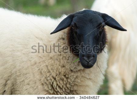 Christian Weber's Portfolio on Shutterstock.