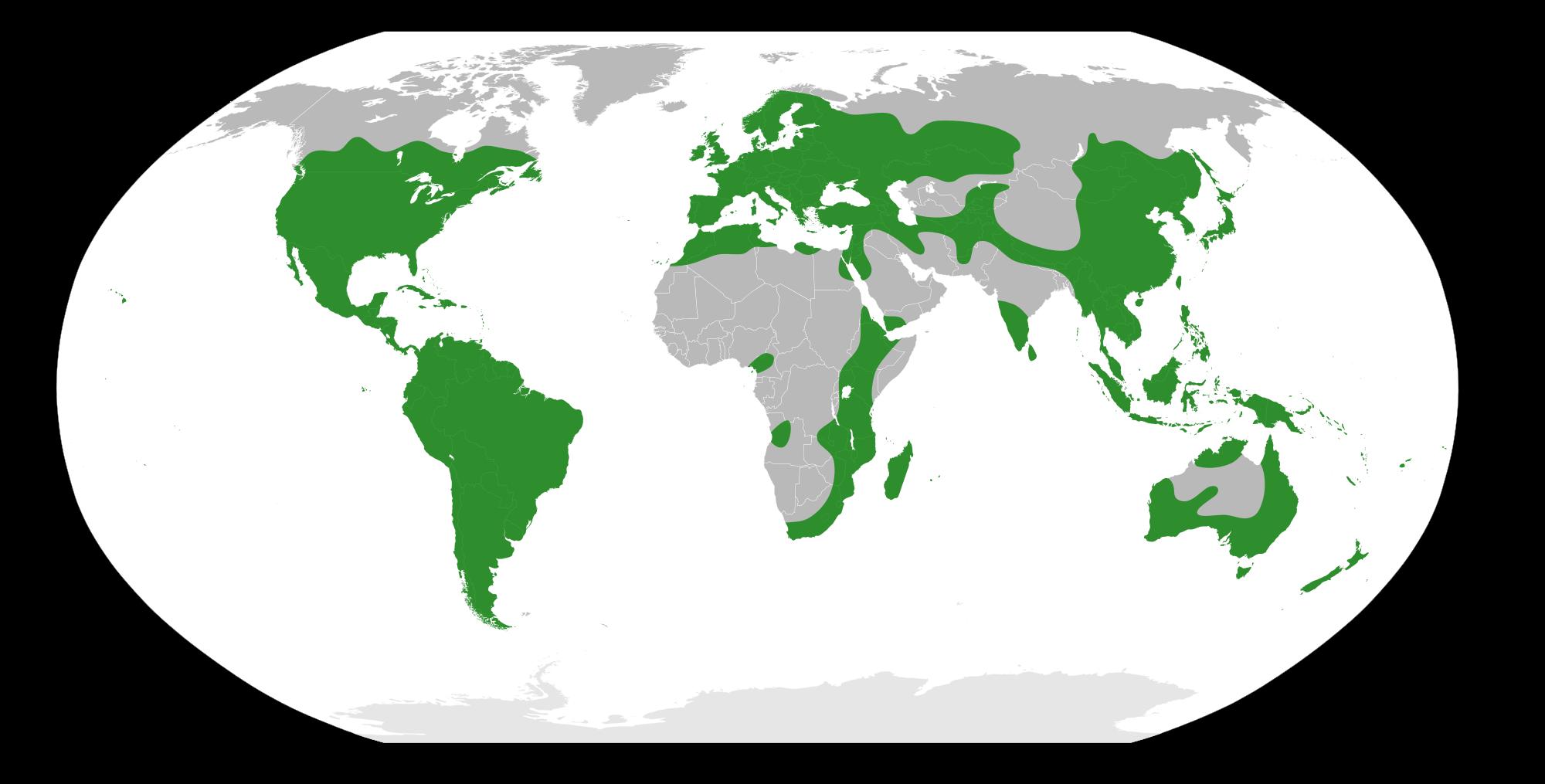 File:Rhamnaceae Distribution.svg.