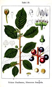 BioLib index of Latin species names.