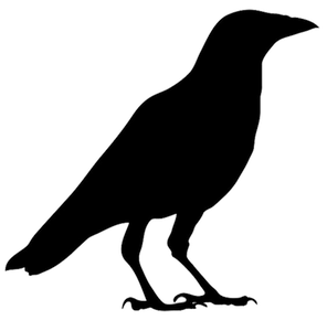 A Crow Who Became a Fictional Character.