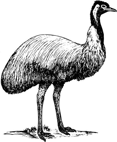 Emu Animal Bird clip art Free vector in Open office drawing svg.