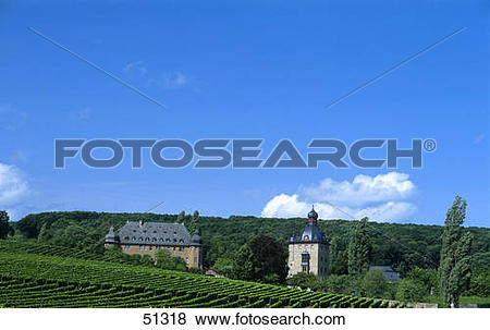 Pictures of Vineyard in front of castle, Vollrads castle, Oestrich.
