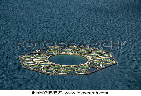 "Stock Photograph of ""Stechlin Cisco fish farming, fish traps."