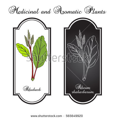 Rhubarb Stock Vectors, Images & Vector Art.