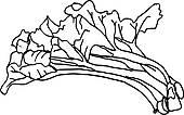Rheum Rhabarbarum Clip Art.