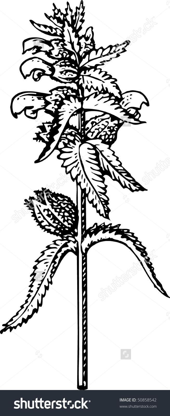 Plant Rhinanthus Stock Vector 50858542.