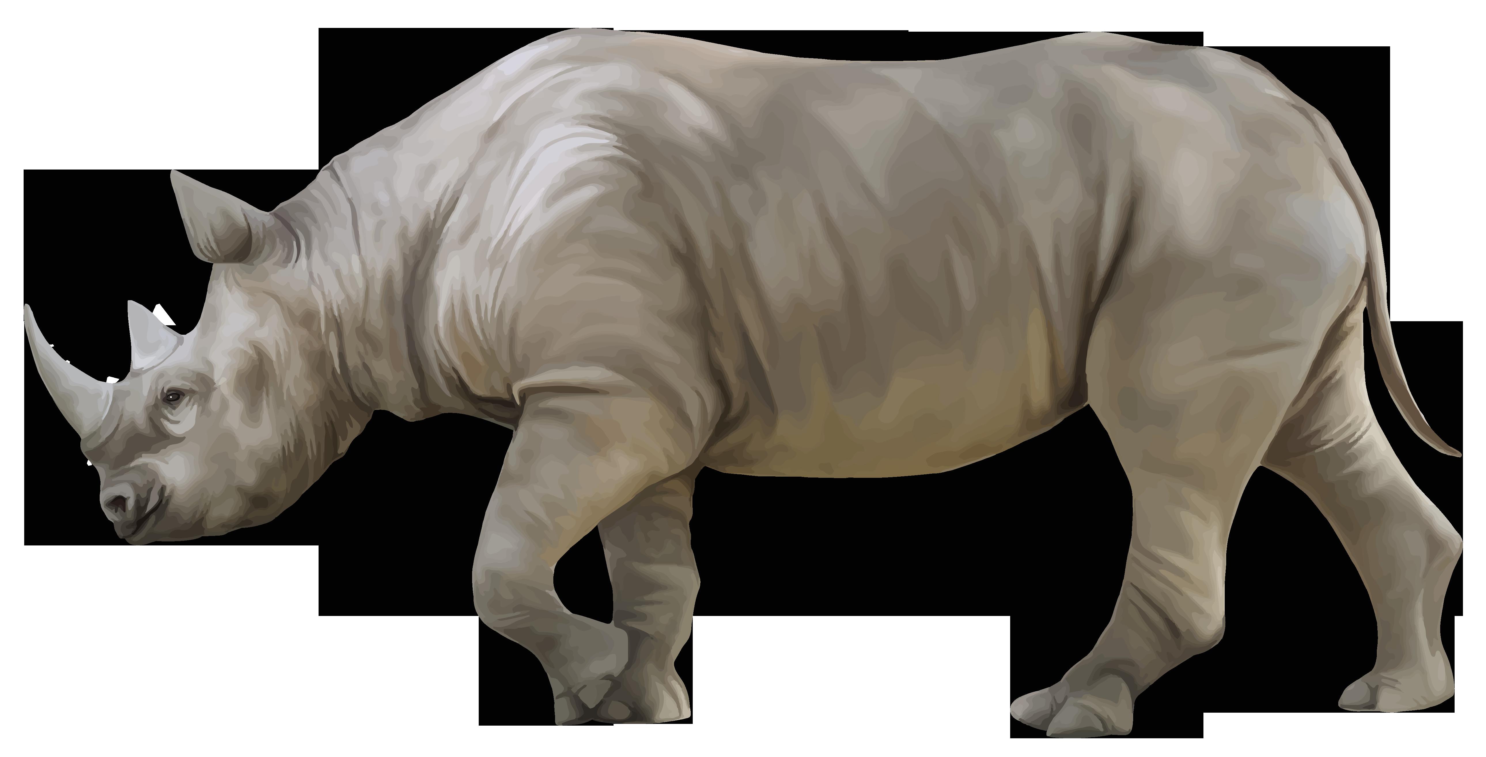 Rhino PNG Clipart.