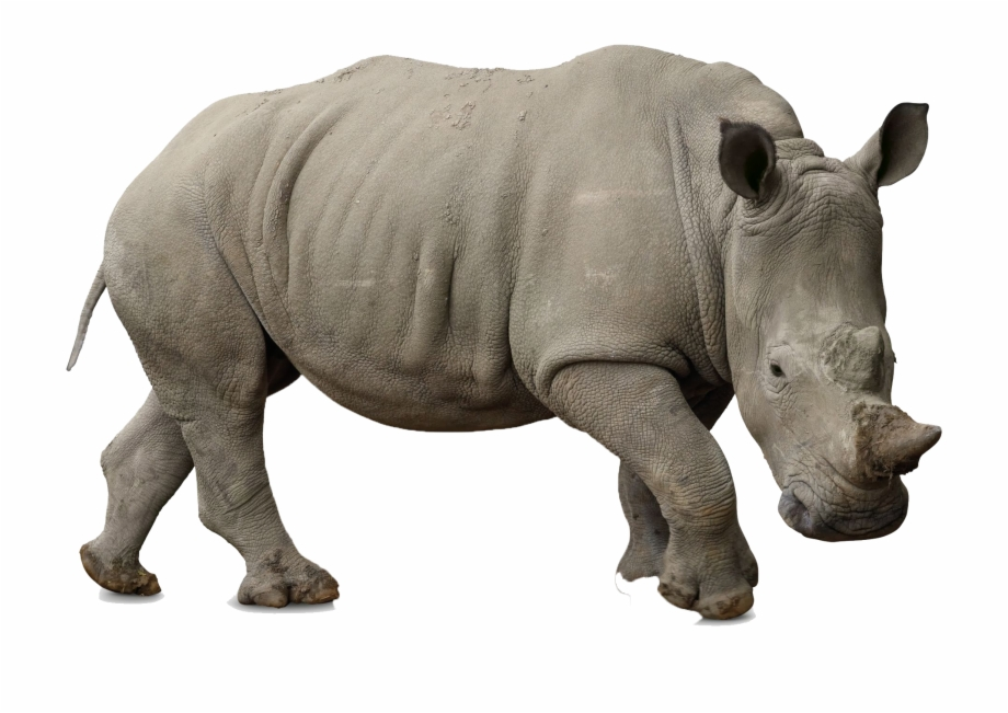 Rhino Png Free Background.