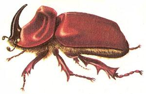 Hercules Beetle Clipart.