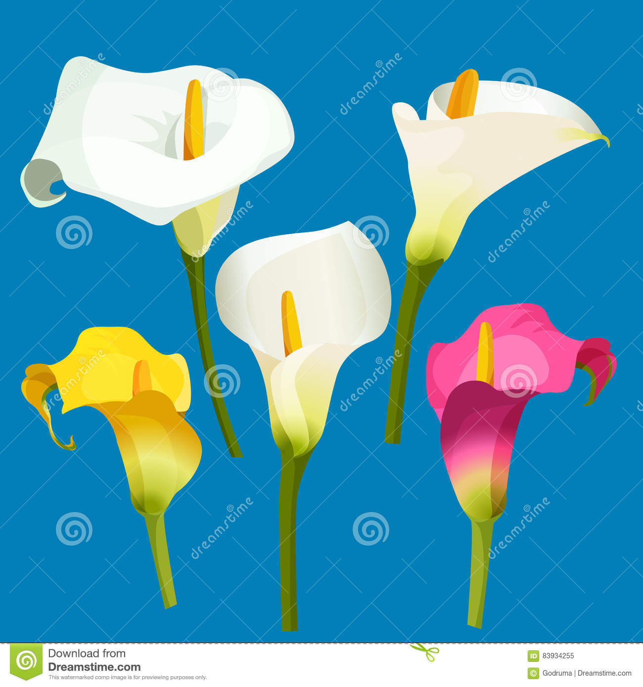 Set Of Calla Lily In White, Pink And Yellow Color. Stock Vector.