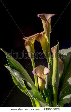 Rhizomatous Perennial Stock Photos, Images, & Pictures.