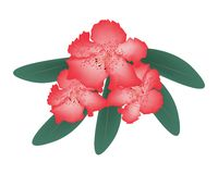 Rhododendron Clipart by Megapixl.