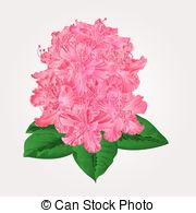 Rhododendron Vector Clip Art Royalty Free. 166 Rhododendron.
