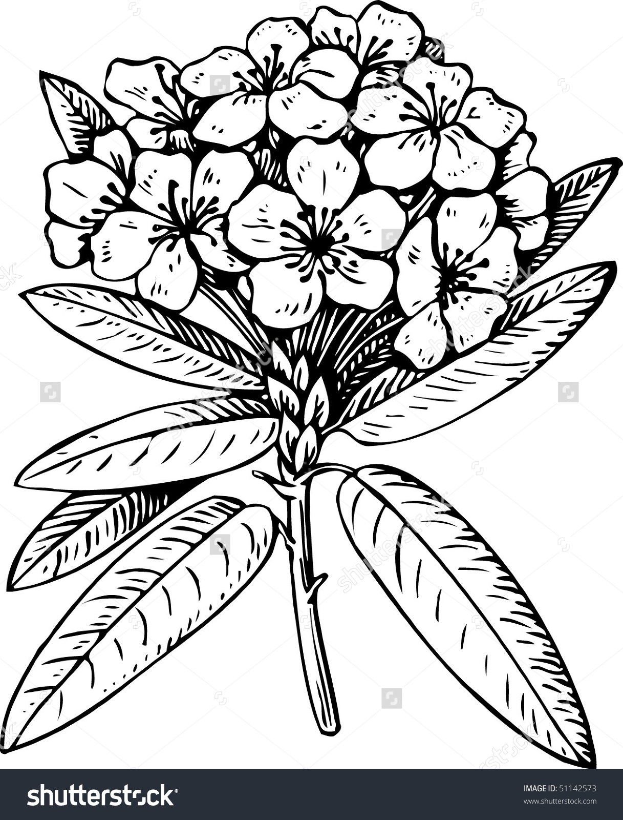 Flower Rhododendron Stock Vector 51142573.