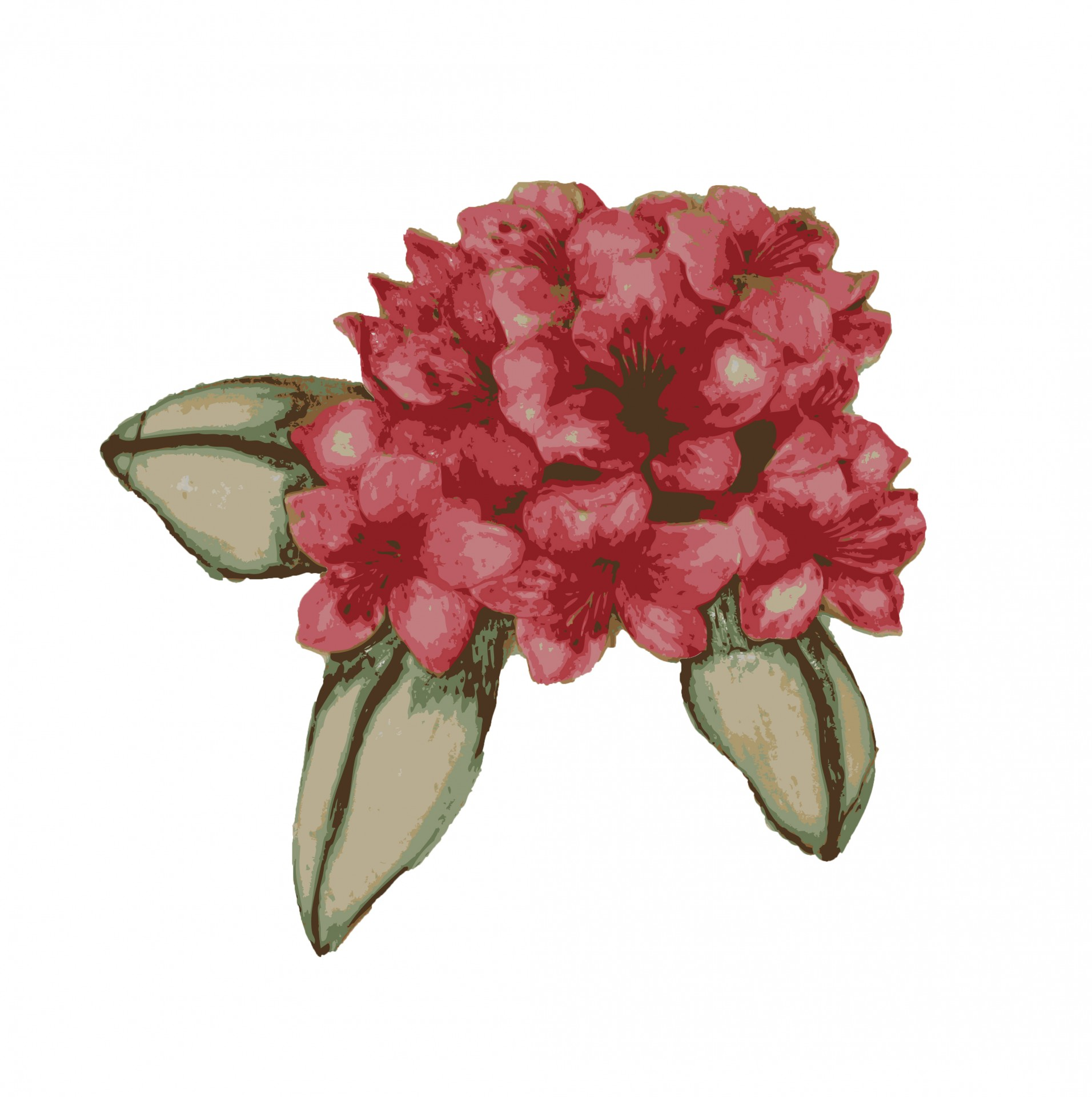 Flower Clipart Free Stock Photo.