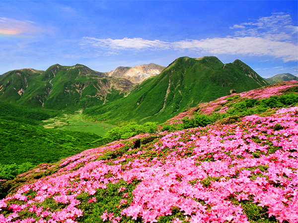 Enjoy the beautiful springtime with flowers in full bloom.