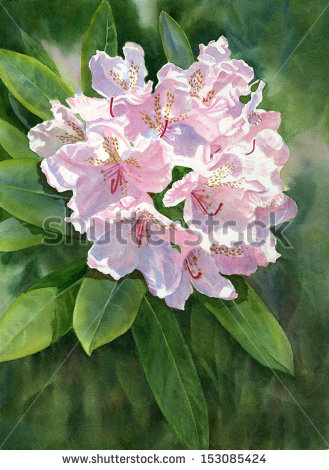 Azalea Painting Stock Photos, Royalty.