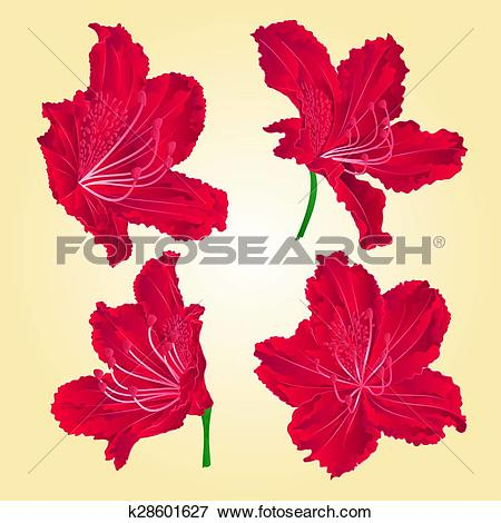 Clip Art of Red rhododendrons vector.eps k28601627.
