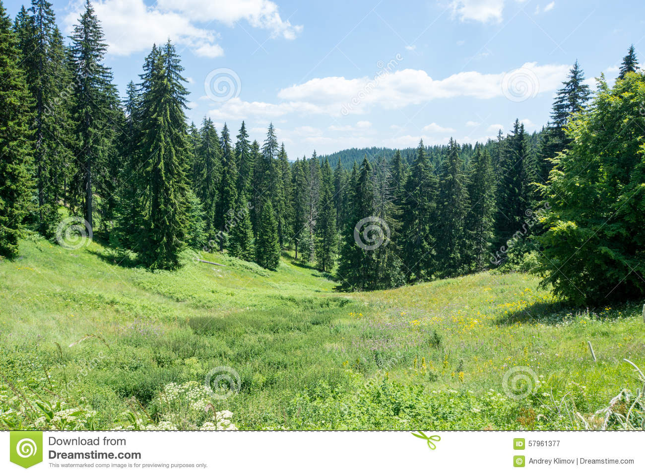 Bulgaria. Summer. Rhodope Mountains And Coniferous Forest Stock.