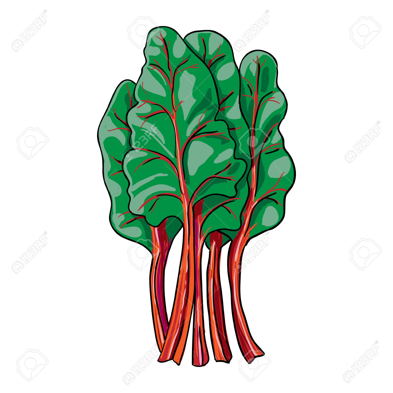 76 Rhubarb Stock Vector Illustration And Royalty Free Rhubarb Clipart.