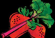 Strawberry rhubarb clipart.