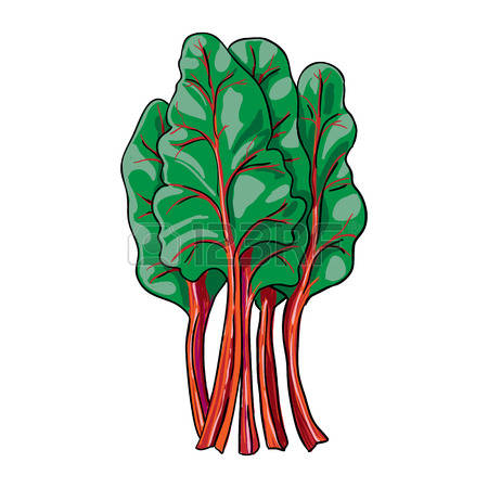 Collection of Rhubarb clipart.