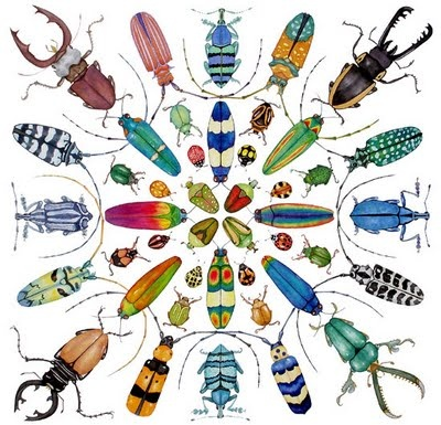 1000+ images about Insects on Pinterest.