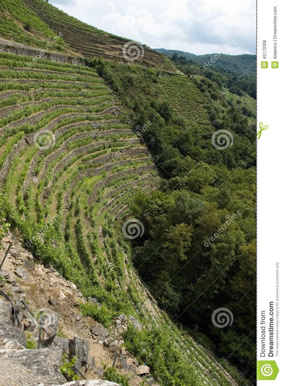 Vineyards Of Ribeira Sacra Stock Photo.