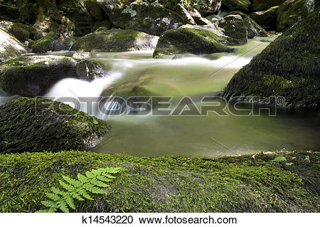 Stock Photography of Rainforest panorama at Ribeira Sacra, Lugo.