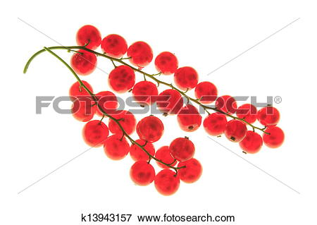 Picture of Red currant (Ribes rubrum) k13943157.