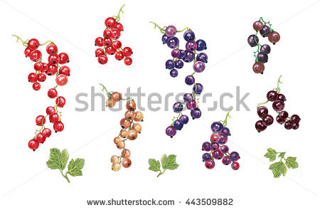 Ribes Stock Photos, Royalty.