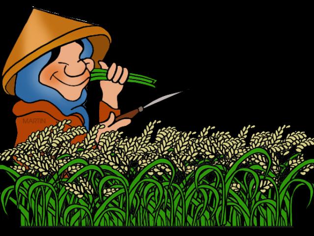 Rice clipart farming, Rice farming Transparent FREE for.