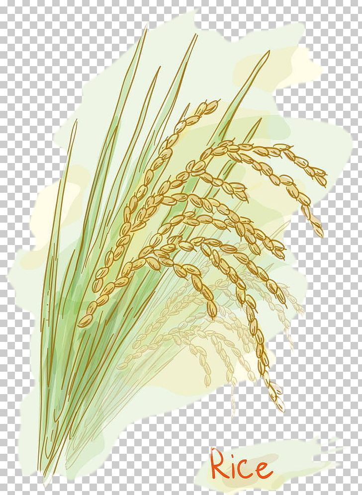 Rice Stock Photography Watercolor Painting PNG, Clipart.