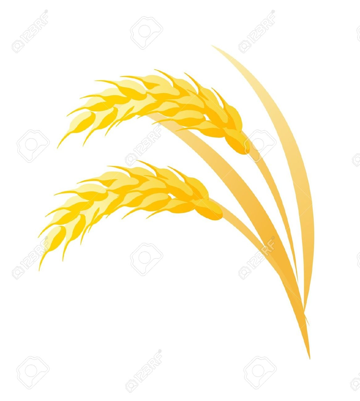 Rice plant clipart.